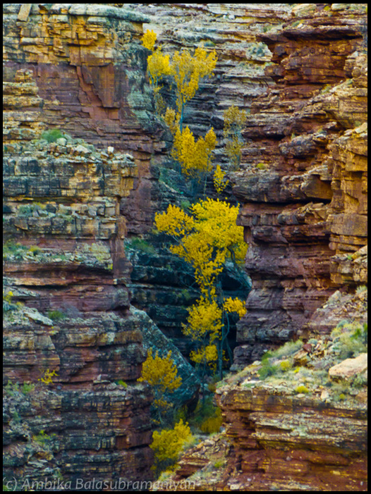 Fall in Slot Canyon